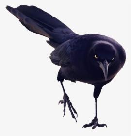 Black Bird PNG Images, Free Transparent Black Bird Download