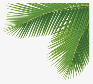 Green Palm Leaves Png Clipart Palm Leaf Clipart Png Transparent Png Kindpng Check out our tropical aesthetic selection for the very best in unique or custom, handmade pieces from our shops. green palm leaves png clipart palm