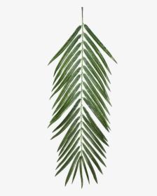 Aesthetic Palm Leaf Png Transparent Png Kindpng