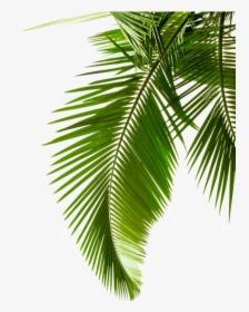 Tropical Leaves Png Images Free Transparent Tropical Leaves Download Kindpng Kali ini videonya agak lumayan panjang. tropical leaves png images free