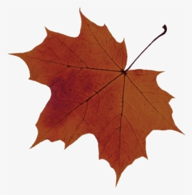 Red Tree Red Maple Tree Png Transparent Png Kindpng