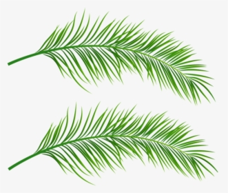 Palm Leaves Png Images Free Transparent Palm Leaves Download Kindpng Tropical leaves frame png transparent image for free, tropical leaves frame clipart picture with no background high quality, search more creative download the tropical leaves frame png images background image and use it as your wallpaper, poster and banner design. palm leaves png images free