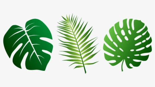 Jungle Leaves Png Images Free Transparent Jungle Leaves Download Kindpng Palm leaf, palm, leaves png transparent clipart image and psd file for free download. jungle leaves png images free