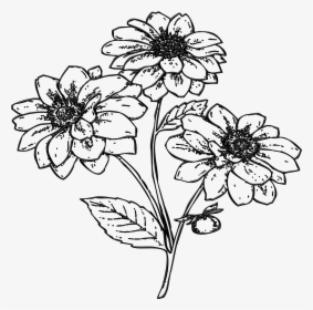 Gambar Ilustrasi Tanaman Bunga Hd Png Download Kindpng