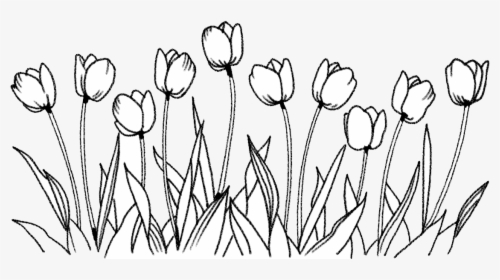 Flower Tulip Coloring Book Line Art Drawing Flowers Png Transparent Drawing Png Download Kindpng