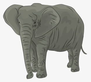 African Elephant Hd Png Download Kindpng