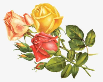 Yellow Roses Png Images Free Transparent Yellow Roses Download Kindpng