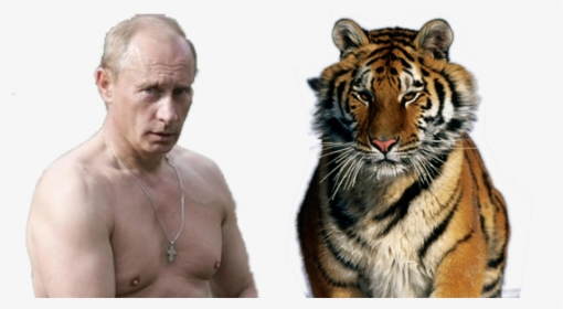 Vladimir Putin Png Images Free Transparent Vladimir Putin Download Kindpng