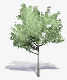 Architectural Trees Png