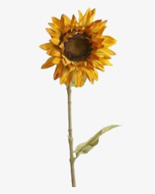Aesthetic Sunflower Tumblr Png Transparent Png Kindpng