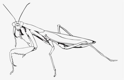 Mantis Png Praying Mantis Drawing Easy Transparent Png Kindpng