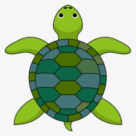 Clipart Turtle Top Turtle Inside Shell Cartoon Hd Png Download