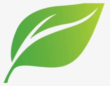 Green Leaf Png Images Free Transparent Green Leaf Download Page 10 Kindpng