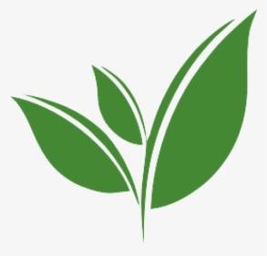 Transparent Kettle Clipart Green Tea Leaves Png Png Download Kindpng