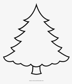 Arvore De Natal Png Christmas Ornament Transparent Png Kindpng