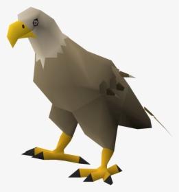 Download Transparent Png Prey Birds Of The Desert Png Download Kindpng