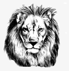 Drawn Lion Face Outline Lion Head Easy Drawing Hd Png Download Kindpng Collection of 25 outline lion head tattoo. lion head easy drawing hd png download