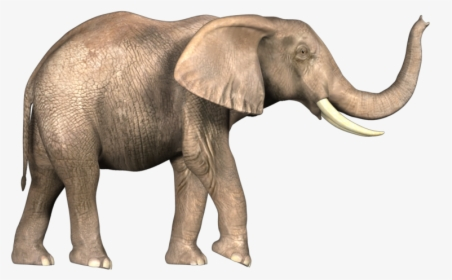 Elephant Png Images Free Transparent Elephant Download Kindpng Baby elephant png tribal elephant png elephant trunk png elephant drawing png elephant png republican elephant png. elephant png images free transparent