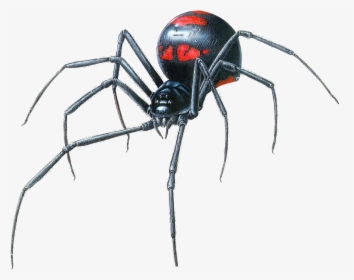 Spider Hanging Png Black Widow Spider Back Transparent