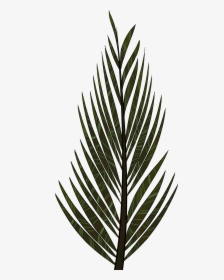 Freetoedit Leaves Leaf Tree Nature Bush Bushes Aesthetic Leaves Drawing Hd Png Download Kindpng