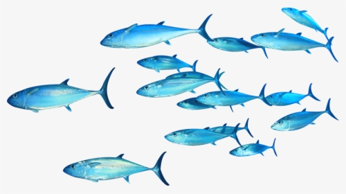 School Of Fish Png Images Free Transparent School Of Fish Download Kindpng