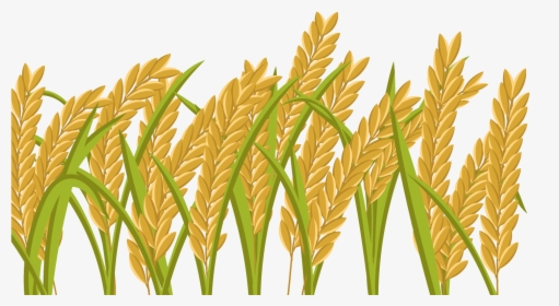 Wheat Field Background - Download Free Vectors, Clipart Graphics & Vector  Art