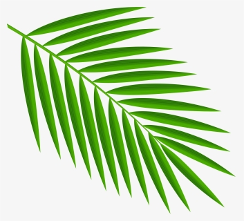Palm Leaves Png Images Free Transparent Palm Leaves Download Kindpng Free for commercial use no attribution required high quality images. palm leaves png images free