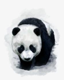 Giant Panda Bear Red Panda Desktop Wallpaper Baby Pandas Trail Of The Panda Movie Hd Png Download Kindpng